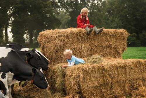 Bí quyết nâng cao tầm vóc của người Hà Lan